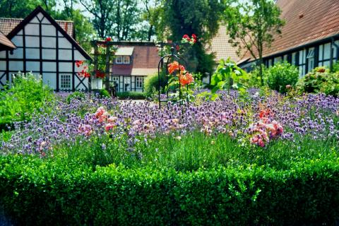 lavender garden to repel pests